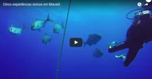 Vídeo de Maceió